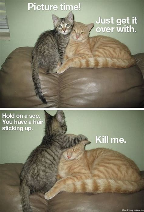 Cheese! - Lolcats - lol | cat memes | funny cats | funny