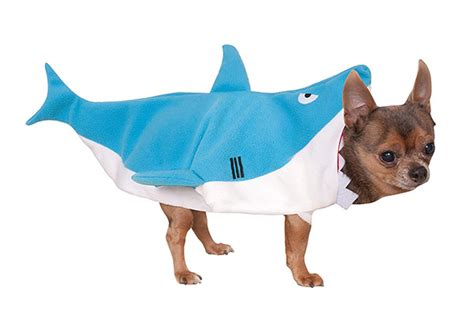 15 Best Halloween Costumes for Dogs and Cats   PetMoneySaver
