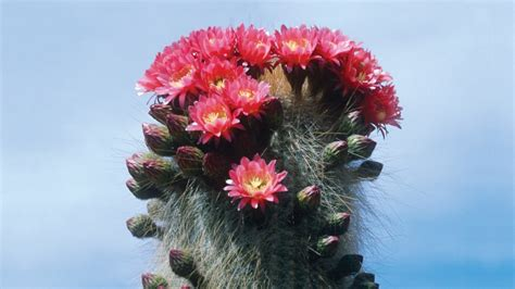 The Strange Wonders of Cactuses, the Plant of Our Times