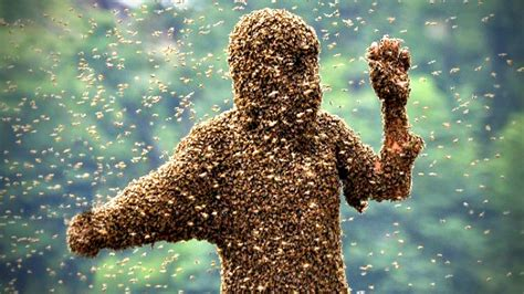 Killer Bees Sting Woman 1,000 Times!!! - YouTube