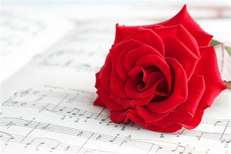 Background with Red Rose and Music Sheet | Gallery