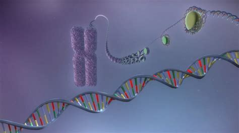 From DNA to protein | Video | yourgenome