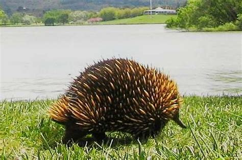 Australian Wildlife - Outback Animals Picture Gallery