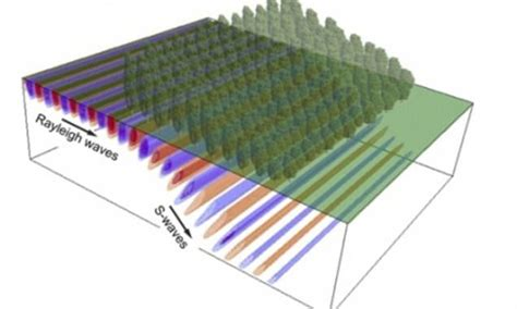 The 'invisibility cloak' made of trees that could protect