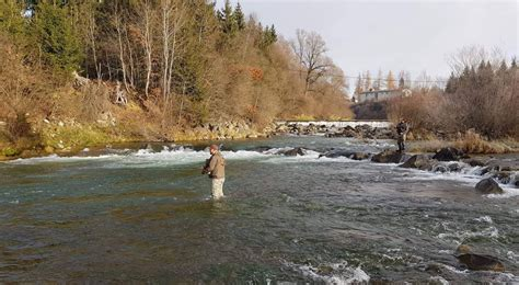 Fly fishing at the river Mur - catcheria