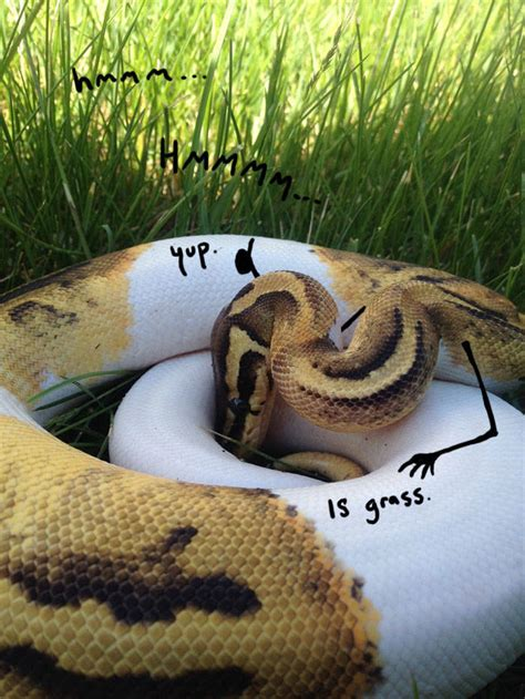 Snakes Look So Much Better With Arms! (30 pics) - Izismile